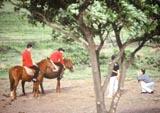 韓国済州島の乗馬