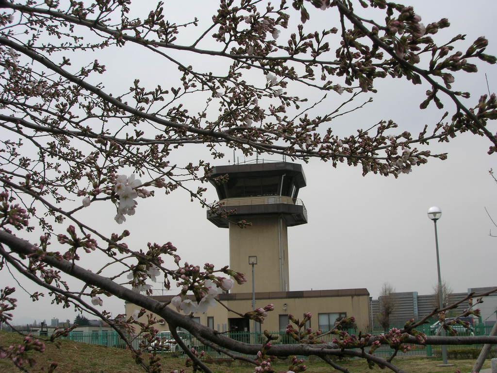 3月26日桜1分咲の調布飛行場
