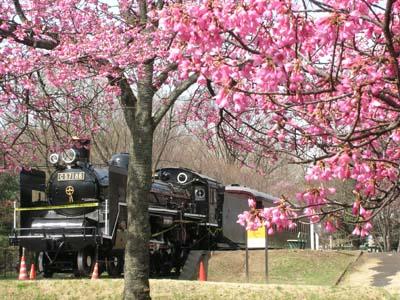 小金井公園の春のSL
