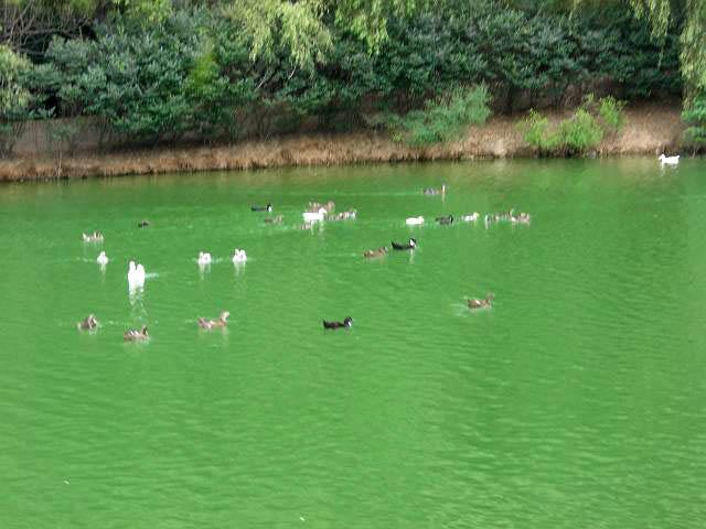 大連森林動物園百鳥園