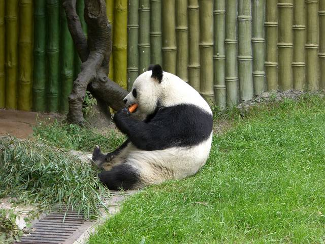 パンダ食事1