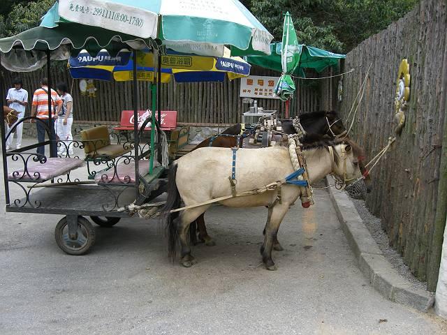 大連森林動物園観光馬車