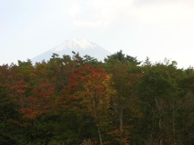 野鳥の森、芝生広場から富士山