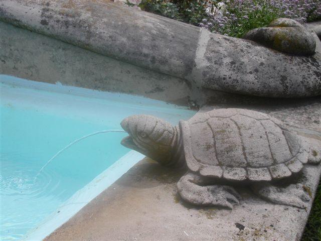 豪邸のプールサイドの亀