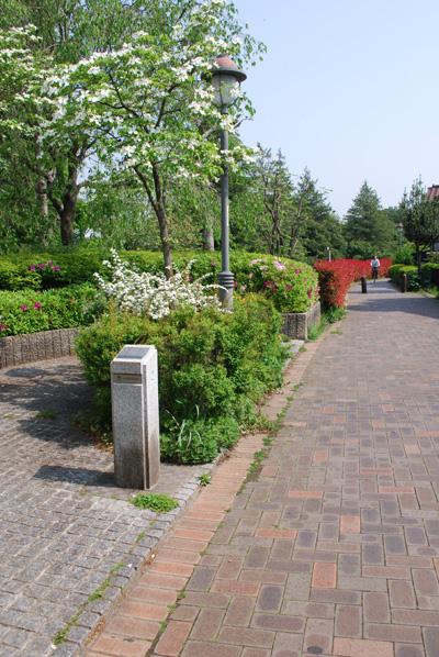 小金井の遊歩道