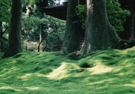 常行堂の苔