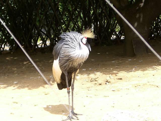 大連森林動物園 冠鶴 1