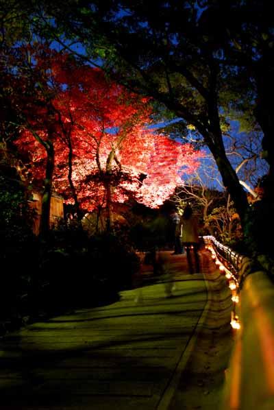 百草園の紅葉ライトアップ