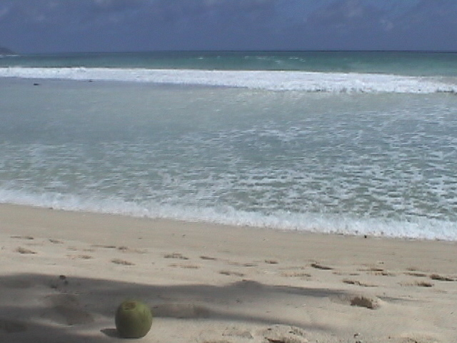 セイシェルの海と椰子の実