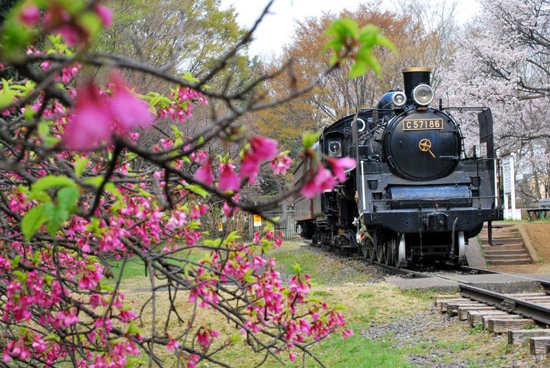 小金井公園の春