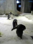 ペンギン(2)