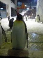 ペンギン(3)