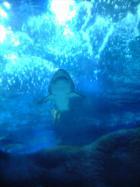 海洋館(1)