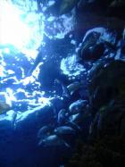 海洋館(2)