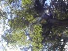 縄文杉から