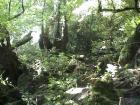もののけ姫の森へ 白谷雲水峡