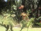 ヴィクトリア植物園