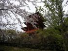 三重の塔と桜